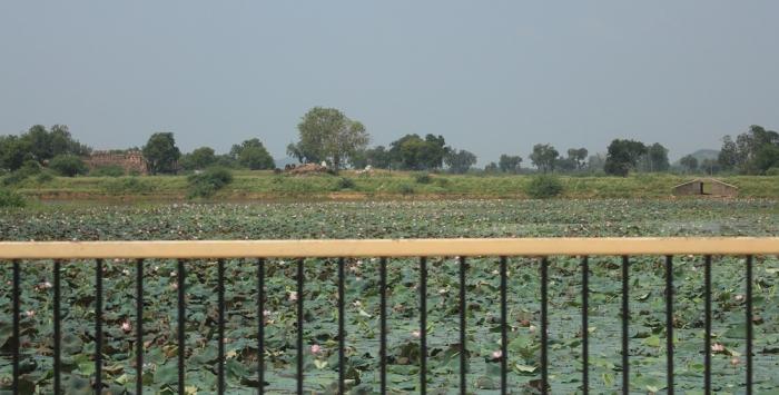 Lago repleto de Flor de Lótus